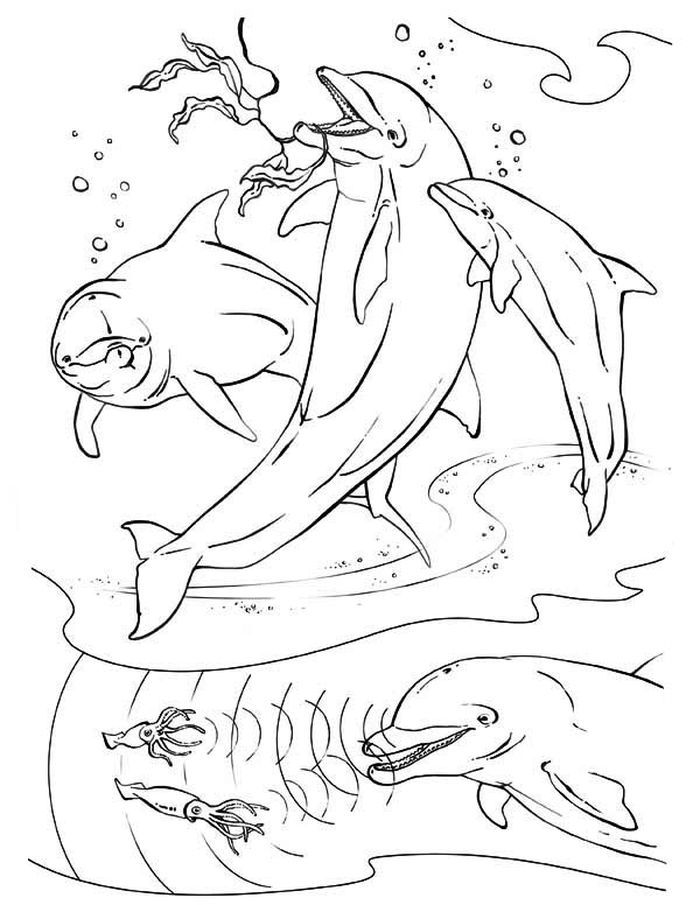 detailed dolphin coloring pages dolphin coloring pages for kids detailed coloring pages dolphin