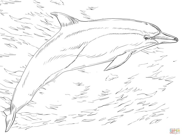 detailed dolphin coloring pages dolphin tale winter coloring pages coloring pages coloring dolphin pages detailed