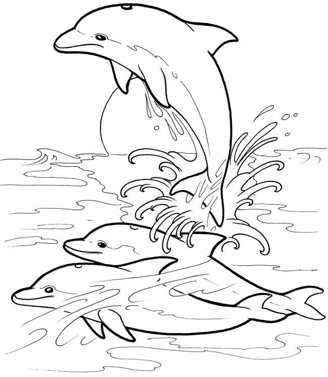 detailed dolphin coloring pages dolphins pdf coloring book relaxing patterns with detailed pages dolphin coloring
