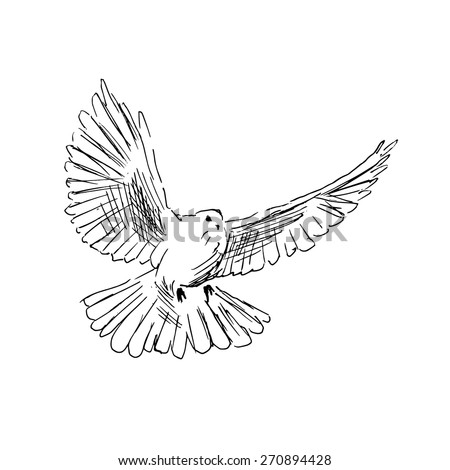 detailed dove drawing carrier pigeon drawing google search pigeon love dove detailed drawing