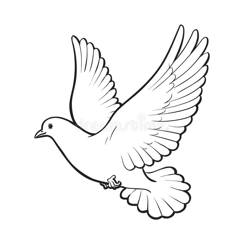 detailed dove drawing detailed dove drawing dove detailed drawing