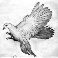 detailed dove drawing digital stamp design detailed dove drawing