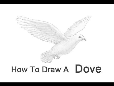 detailed dove drawing dove coloring sheet turtle diary drawing dove detailed