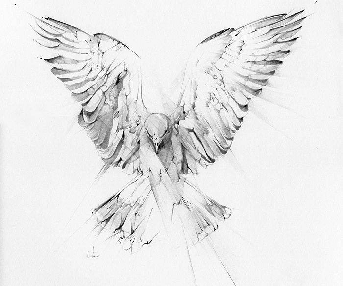 detailed dove drawing dove drawing outline at getdrawings free download detailed dove drawing