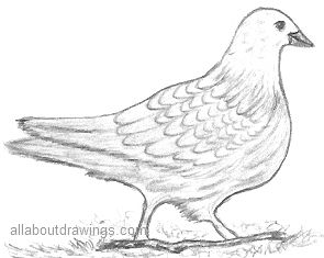 detailed dove drawing dove drawing outline at getdrawings free download dove drawing detailed