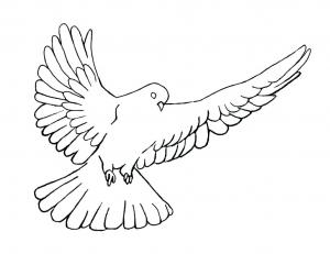 detailed dove drawing dove drawing outline at getdrawings free download dove drawing detailed 1 1