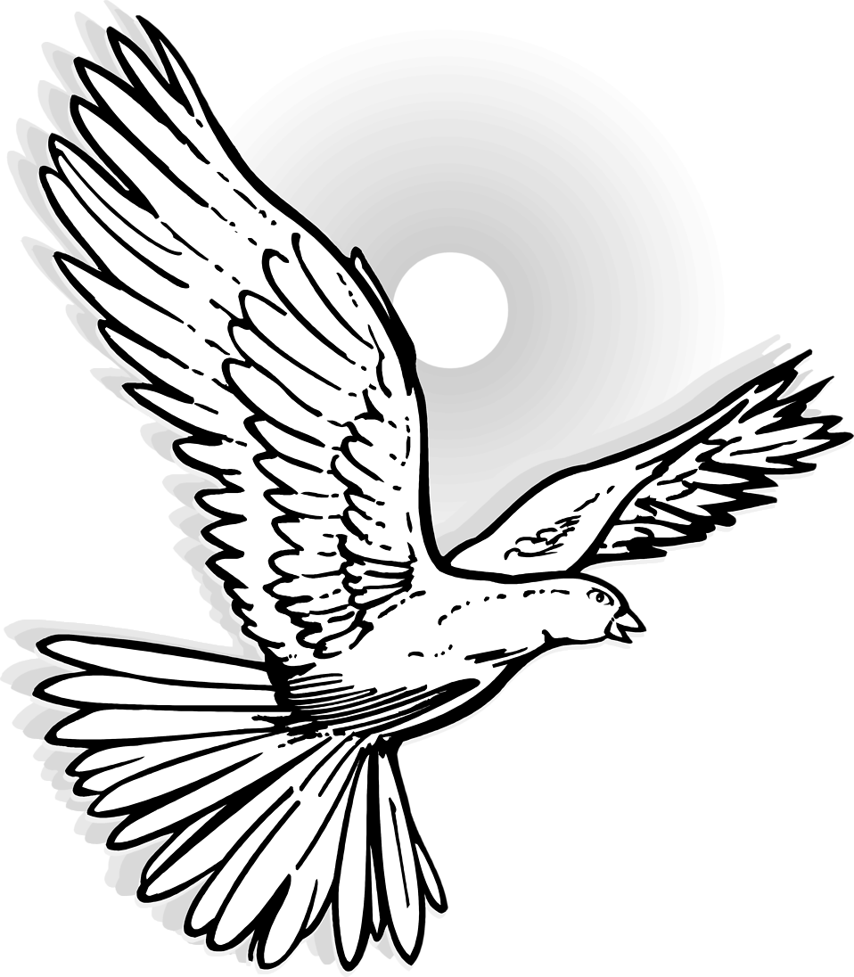 detailed dove drawing dove drawing outline at getdrawings free download drawing detailed dove