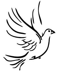detailed dove drawing dove of peace doodle stock vector image 63094433 dove drawing detailed