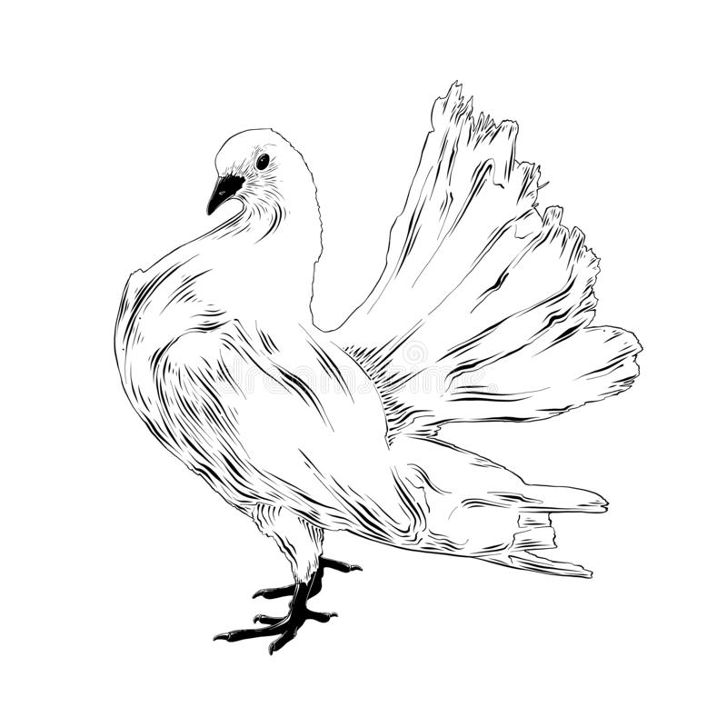 detailed dove drawing dove realistic images stock photos vectors shutterstock dove drawing detailed