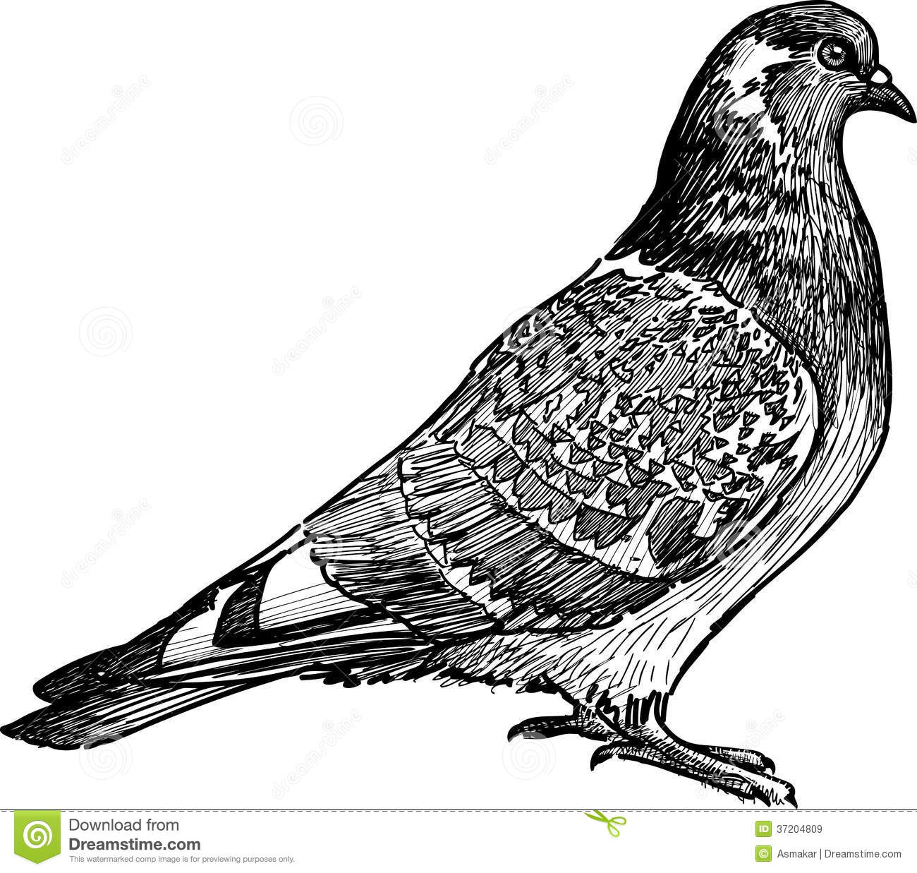 detailed dove drawing flying dove stock photos image 31449813 detailed dove drawing