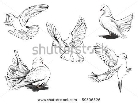detailed dove drawing flying doves clipart clipart suggest clip art free dove drawing detailed