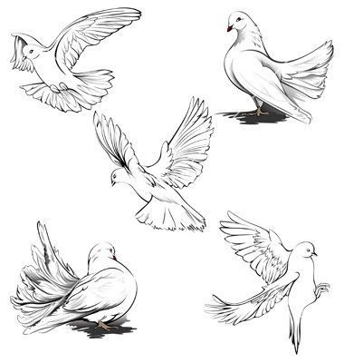 detailed dove drawing hand drawn vector sketches of beautiful white doves in detailed dove drawing