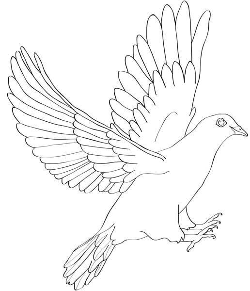detailed dove drawing holy spirit dove drawing at getdrawings free download dove drawing detailed