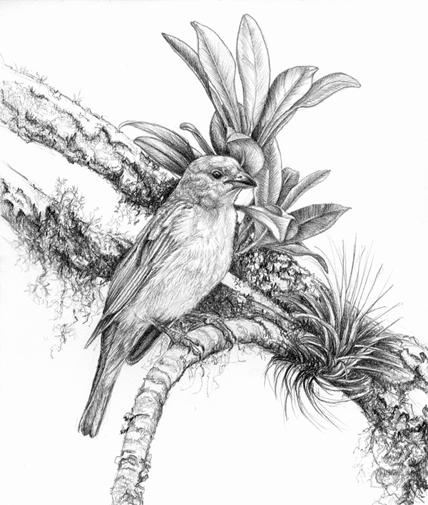 detailed dove drawing mansion big house coloring pages print coloring 2019 drawing detailed dove