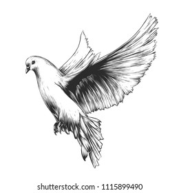 detailed dove drawing prints dove detailed drawing