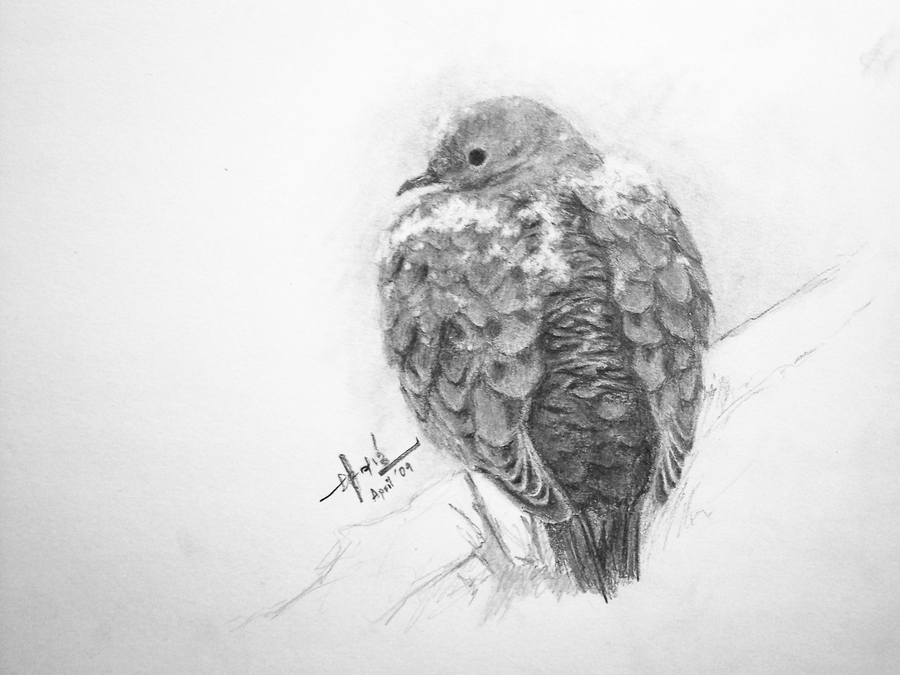 detailed dove drawing stock photos royalty free images vectors shutterstock detailed dove drawing