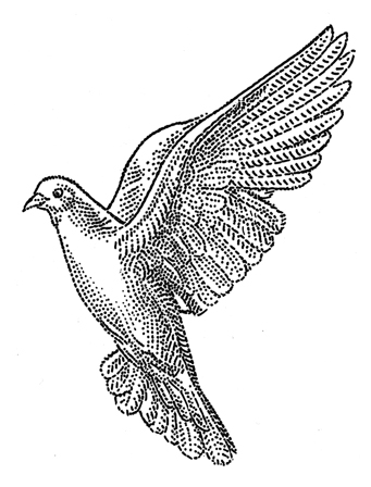 detailed dove drawing trendy bird drawing pencil owl ideas in 2020 with images detailed drawing dove