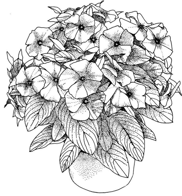 detailed flower coloring pages beautiful flowers detailed floral designs coloring book coloring pages detailed flower 1 1
