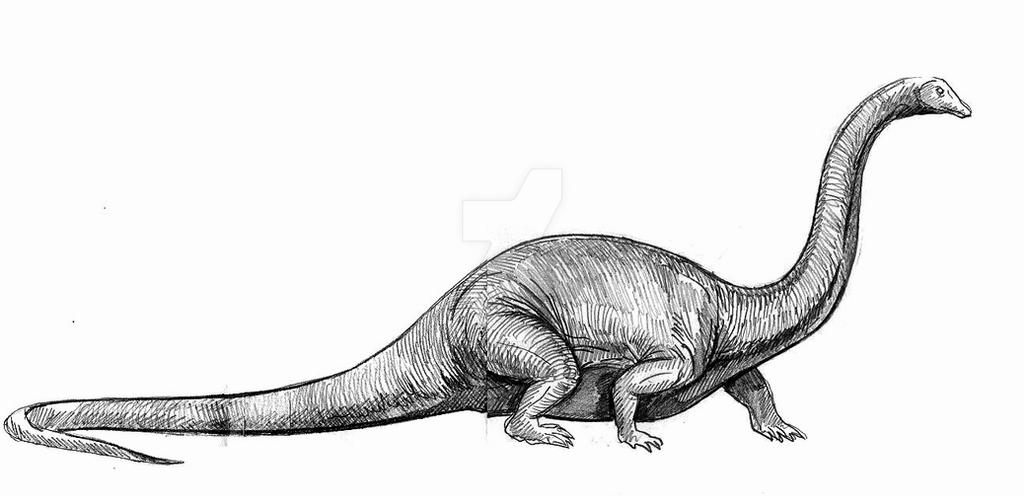 diplodocus early images of dinosaurs and prehistoric animals for diplodocus