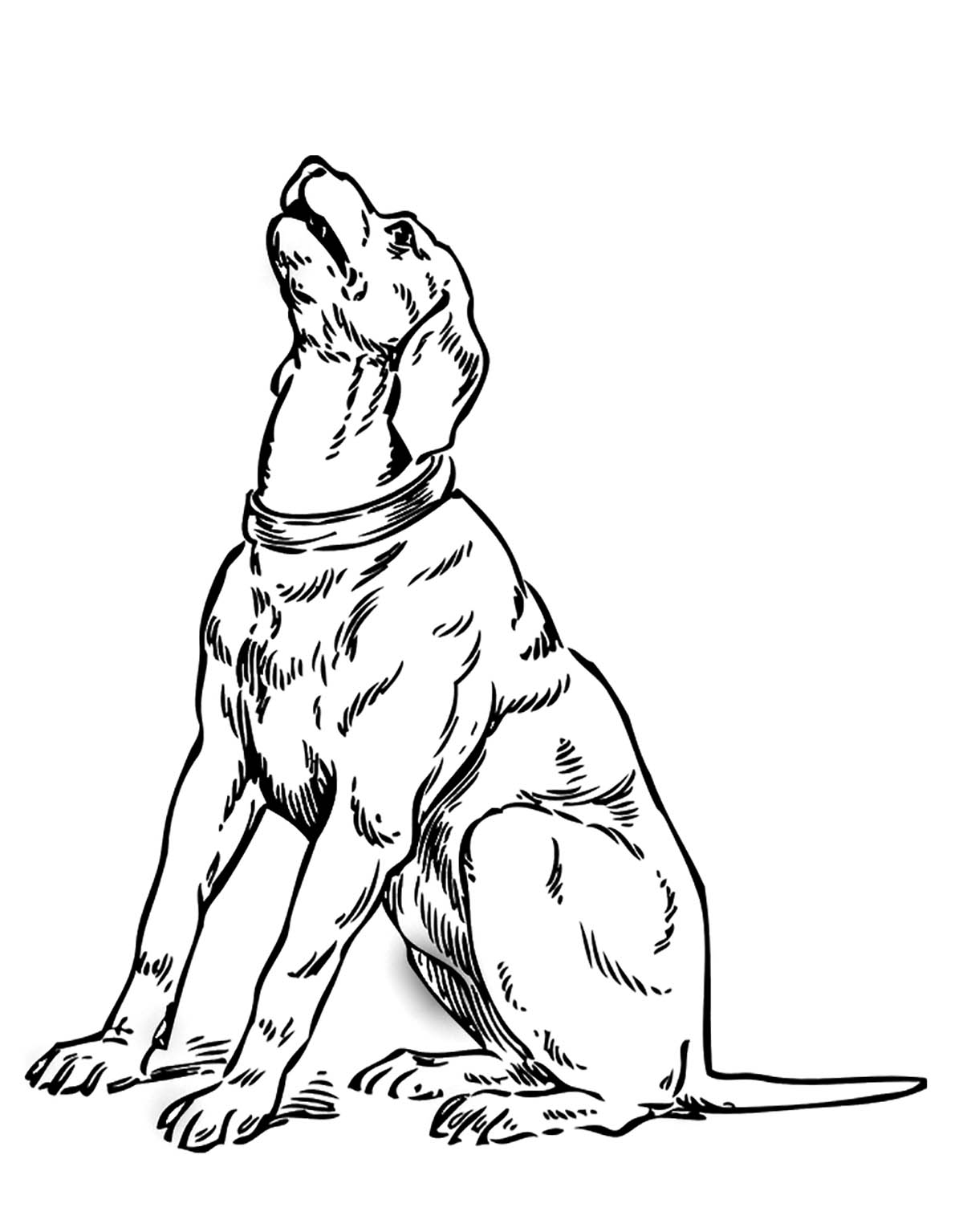 dog color page employ dog coloring pages for your childrens creative time color page dog