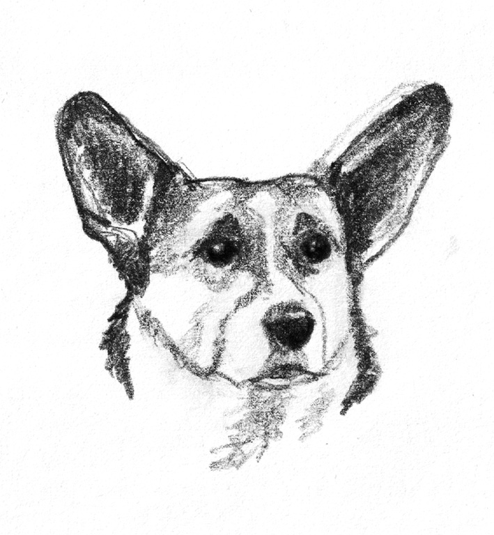 dog drawing boxer dog pencil by frozenpinky on deviantart drawing dog