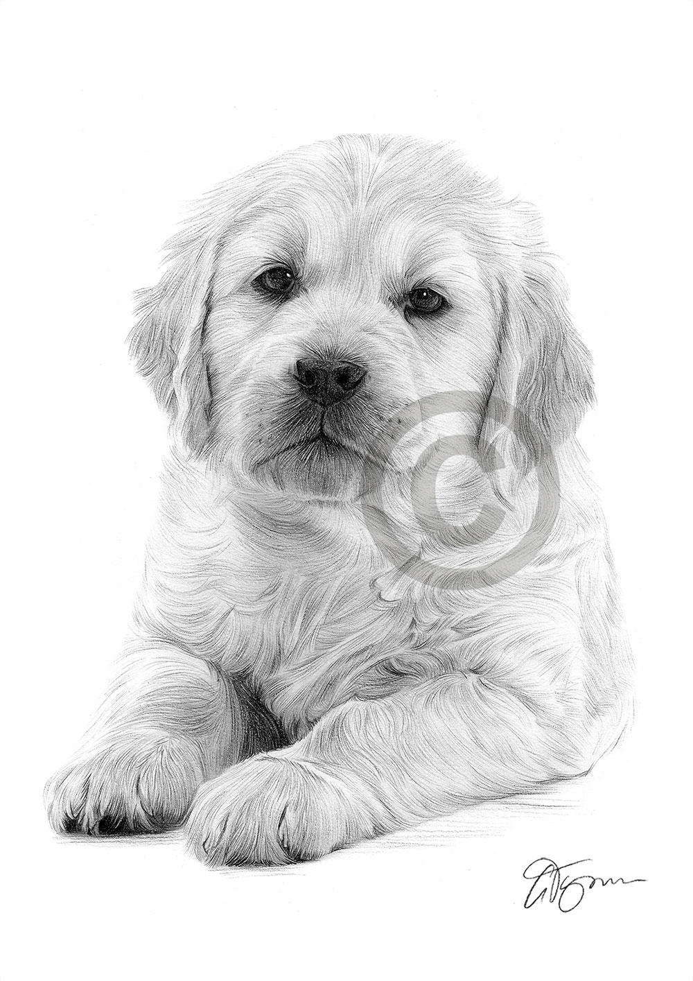 dog drawing custom dog drawing in charcoal from your photo hand dog drawing