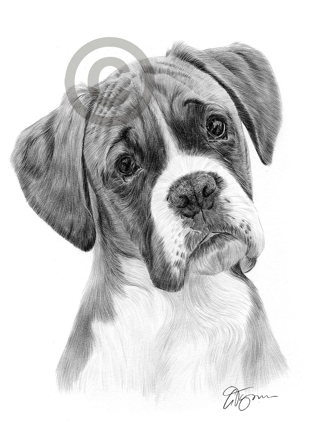 dog drawing dog golden retriever puppy pencil drawing print a4 only drawing dog