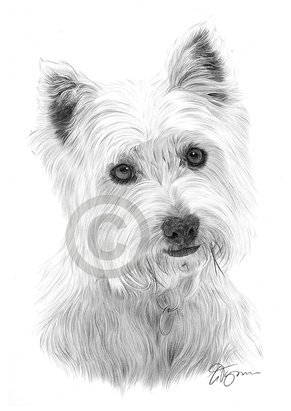 dog drawing dog sketches pencil drawings of dogs dog drawing 1 1