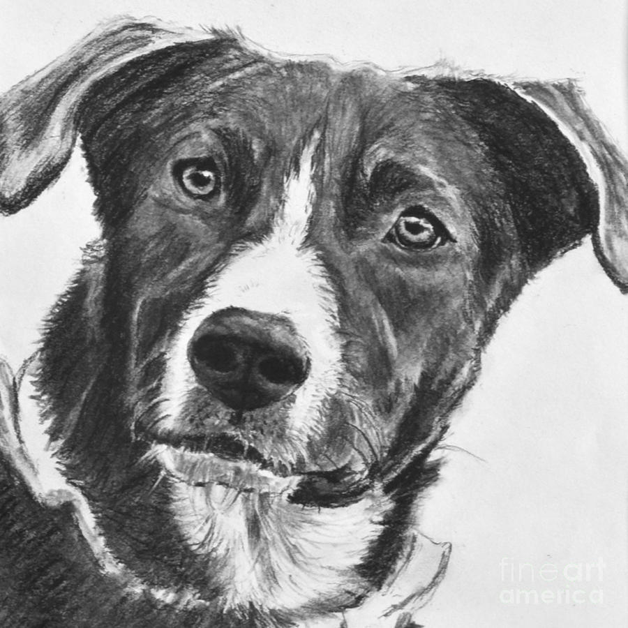 dog drawing dogs archives page 2 of 3 garry39s pencil drawings drawing dog