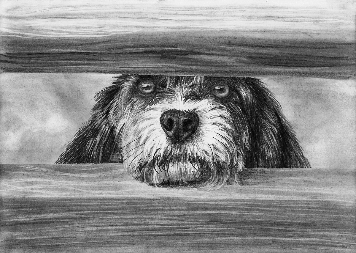 dog drawing drawing labradors realistic dog portrait lesson step by dog drawing