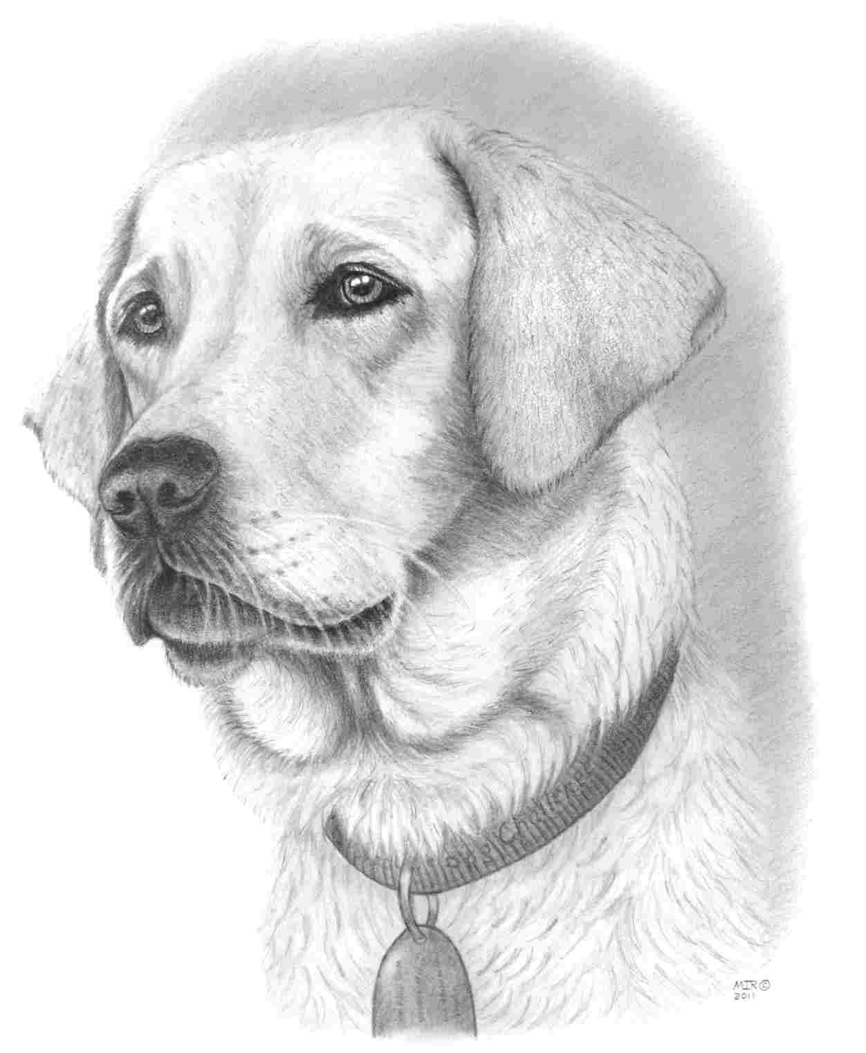dog drawing how to draw a cartoon dog draw central dog drawing