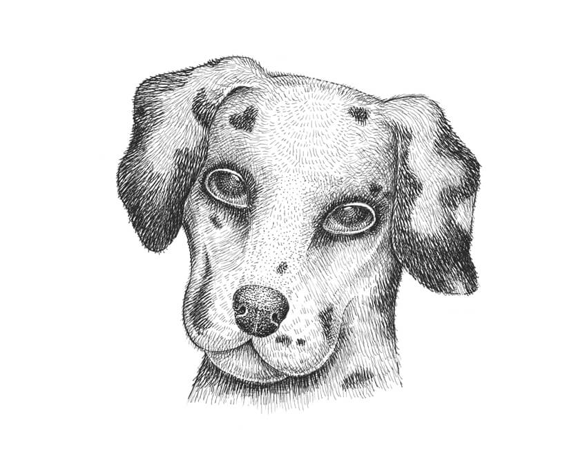 dog drawing how to draw a dog at the gate online art lessons dog drawing