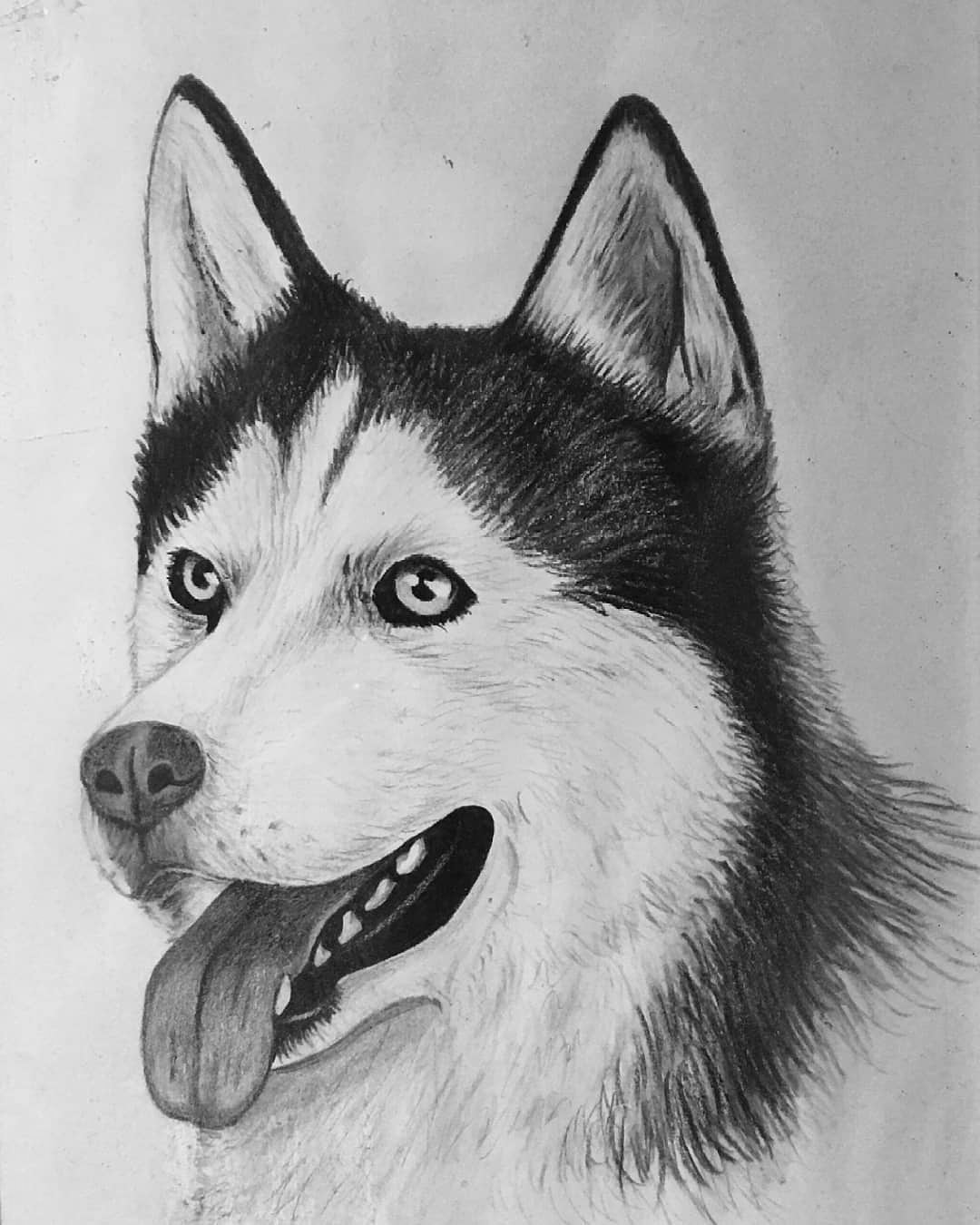 dog drawing how to draw a dog39s tongue how to draw pets drawing dogs drawing dog
