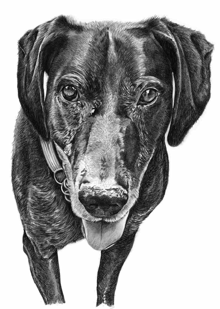 dog drawing how to draw a realistic dog dog sketch hd 2018 youtube dog drawing