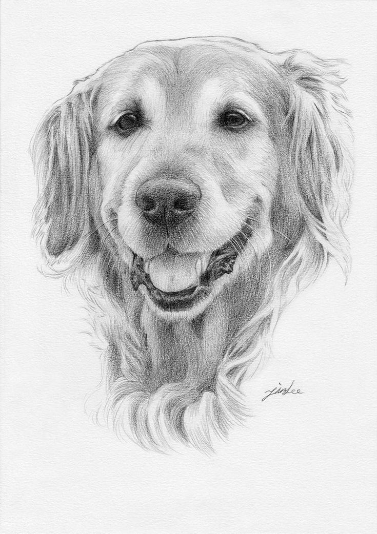 dog drawing pencil drawings of dog and puppies from your photos for sale dog drawing