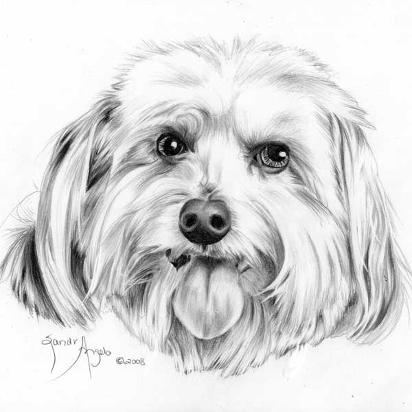 dog drawing pencil drawings of dog and puppies from your photos for sale drawing dog