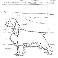 dog grooming coloring pages 400x400 miniature schnauzer line drawing schnauzer grooming coloring dog pages