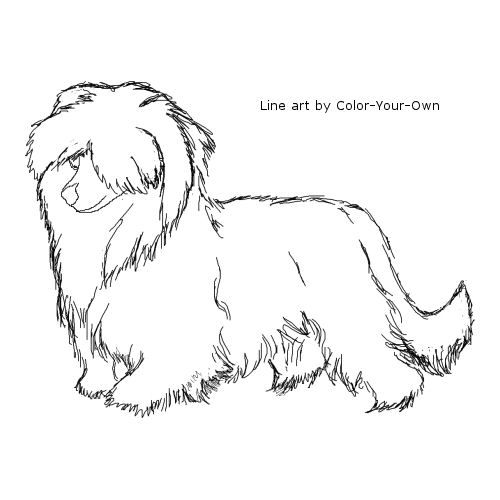 dog grooming coloring pages english springer spaniel coloring page dog coloring page dog grooming pages coloring