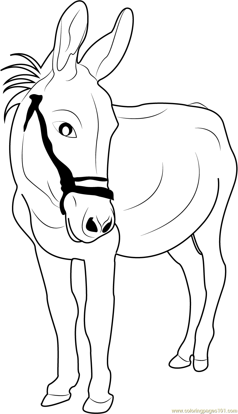 donkey pictures to print free printable donkey coloring pages for kids pictures donkey print to