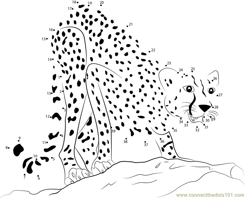dot to dots for adults adult cheetah dot to dot printable worksheet connect the dots adults dot for to