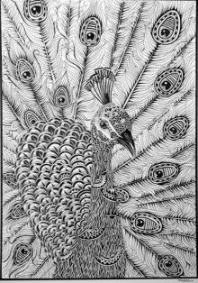 draw peacock peacock drawing black and white at getdrawings free download draw peacock