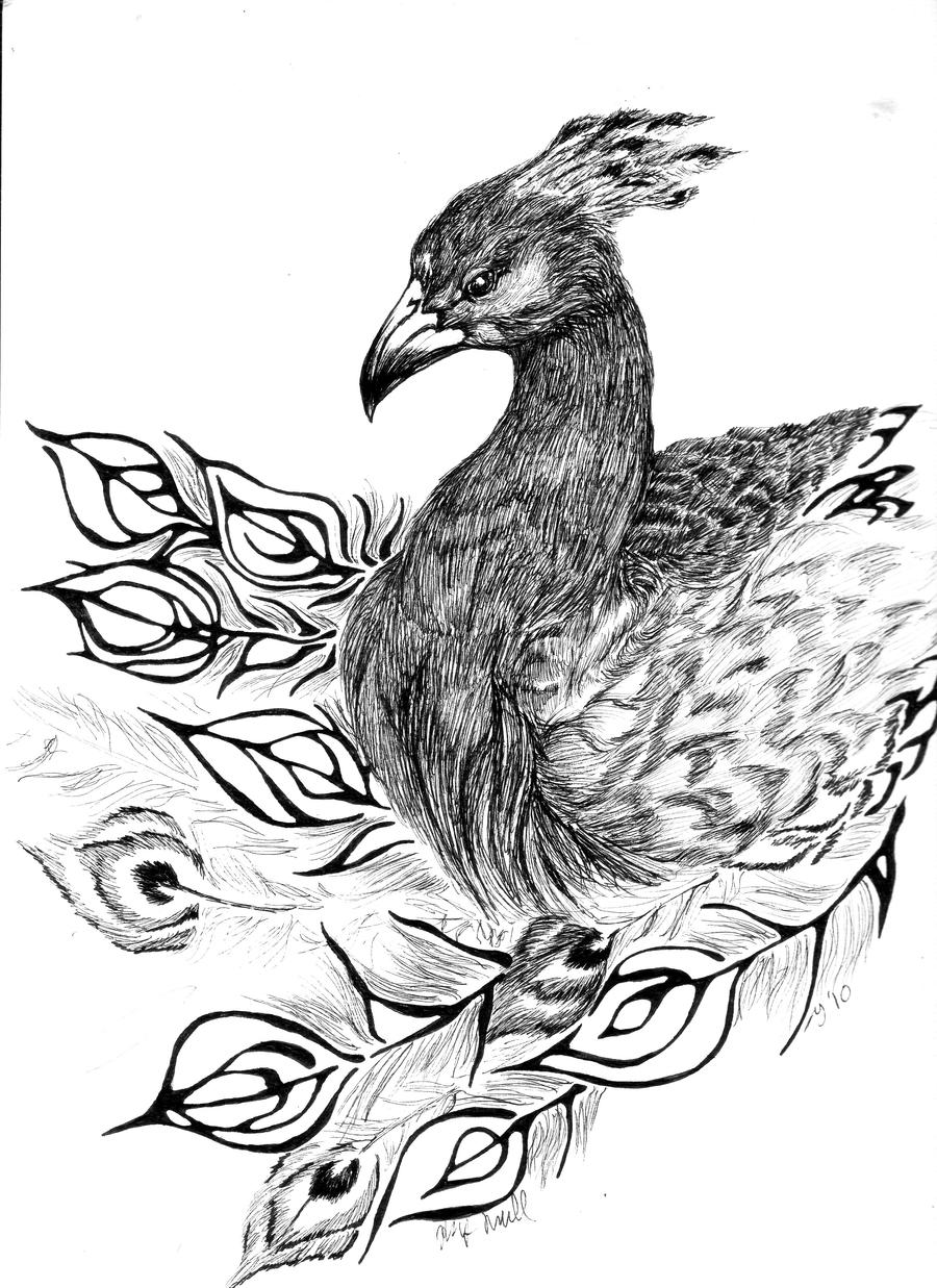 draw peacock peacock line drawing at getdrawings free download peacock draw