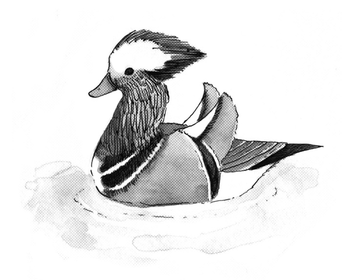 drawing a duck drawing i duck by senorcyborg7 on deviantart drawing duck a