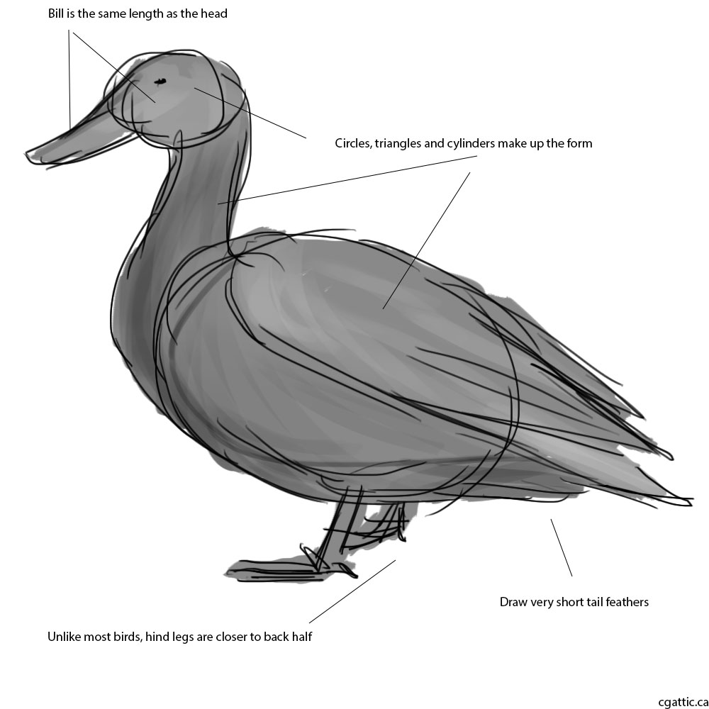 drawing a duck duck drawing by bogieman145 on deviantart duck a drawing