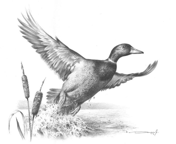 drawing a duck duck drawing nursery decor duck print from charcoal a duck drawing