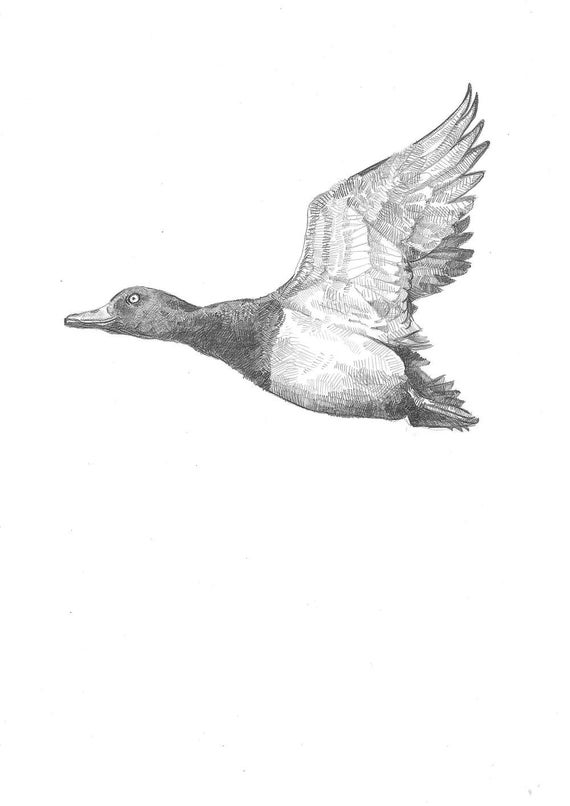 drawing a duck duck flight sketch a day cool drawings drawings duck a drawing