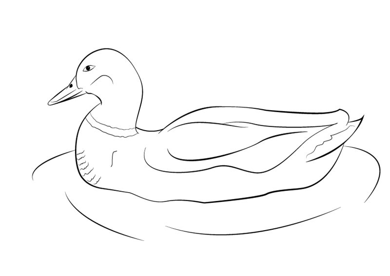 drawing a duck duck line drawing at paintingvalleycom explore drawing a duck