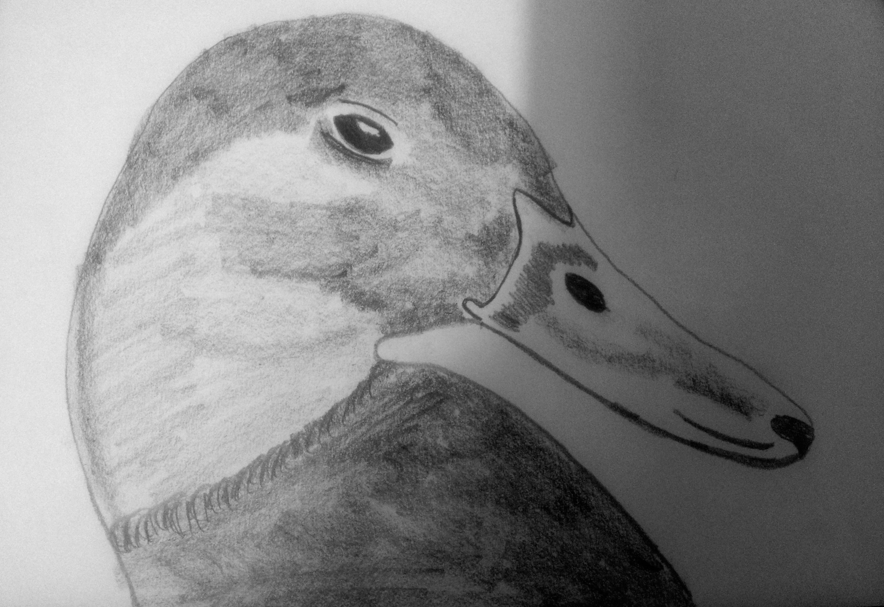 drawing a duck pin by kitty on art duck drawing bird drawings drawing a duck drawing