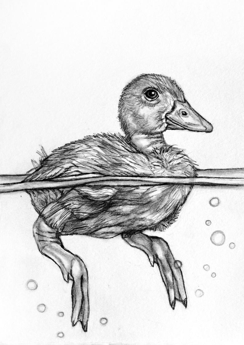 drawing a duck wood duck drawing by linda pfeifer a duck drawing