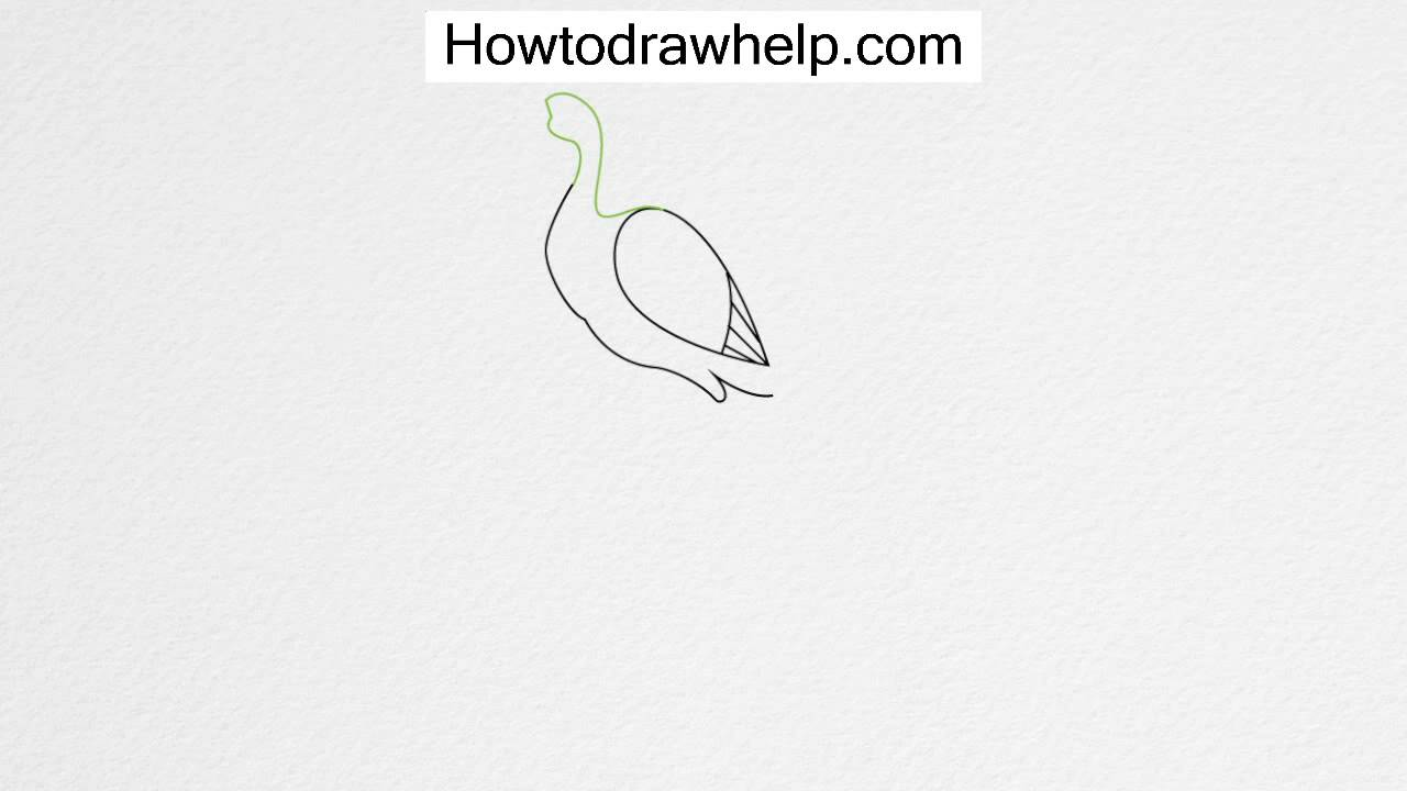 drawing a peacock step by step how to draw a peacock step by step for kids youtube by a drawing peacock step step